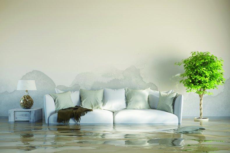 sofa og plante i stue oversvømt av vann